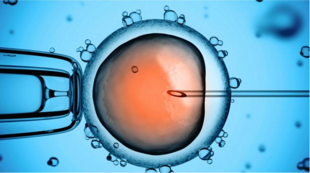 thụ tinh ống nghiệm mất bao lâu?
