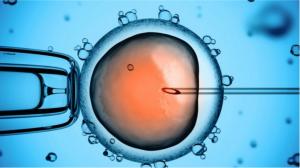 Thụ tinh nhân tạo, thụ tinh ống nghiệm mất bao lâu?